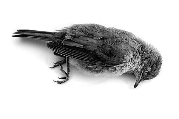 pasarea-din-colivie