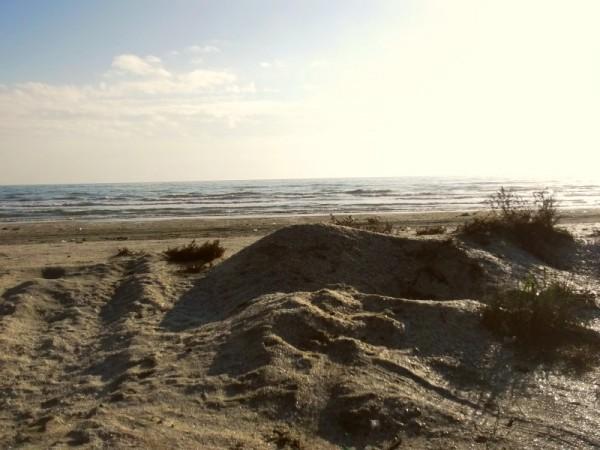 vegetatie-plaja-navodari